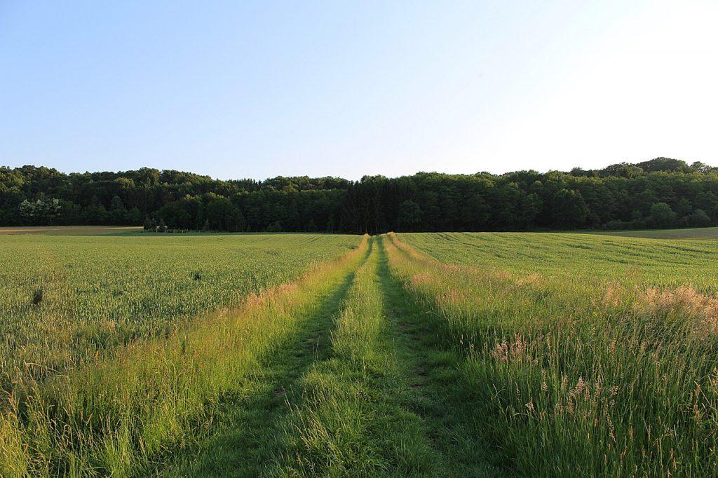 caminar en la naturaleza te hará feliz