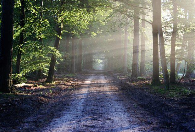 Caminar en la naturaleza te cambia el cerebro