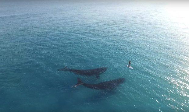 dron filma ballenas junto a una persona