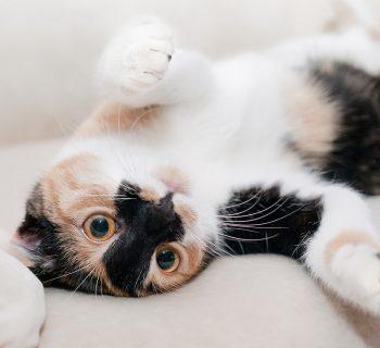 No pararás de reír con estos videos sobre gatos