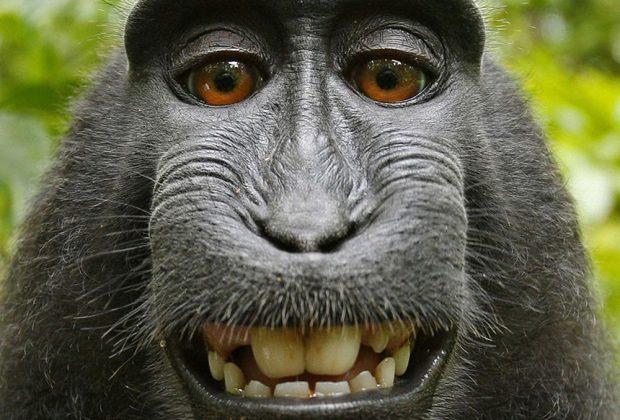 la macaca de la selfie