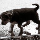 perra salva la vida de recien nacido
